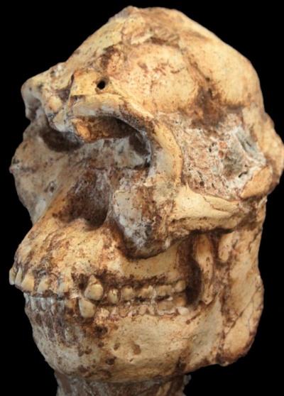 南アの初期人類化石、370万年前...
