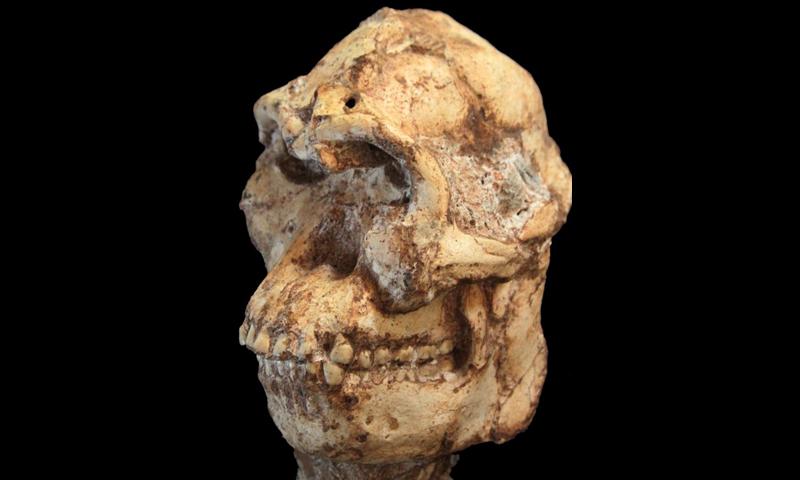 南アの初期人類化石、370万年前のものと判明   ナショナルジオ ...