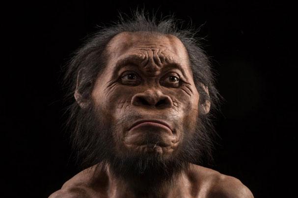 新種のヒト属ホモ・ナレディ発見に驚きと疑問の声ナショナルジオグラフィック日本版サイト