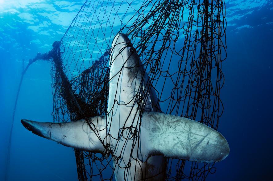 10年で世界の魚の数を回復できる、研究報告ナショナルジオグラフィック日本版サイト