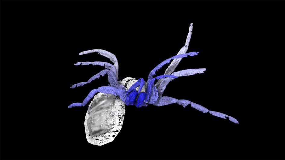 クモの進化の謎解く鍵、3億年前の化石で新種発見   ナショナルジオ ...