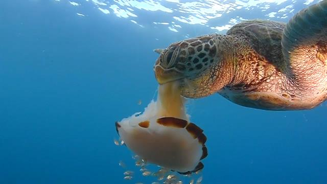 What Food Does Water Turtles Eat