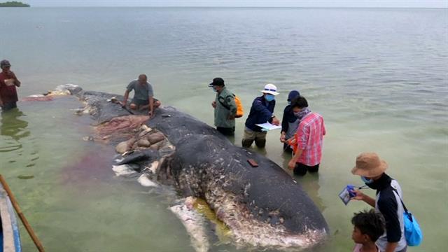 クジラの体内から重さ6キロのプラスチックごみ | ナショナルジオグラフィック日本版サイト