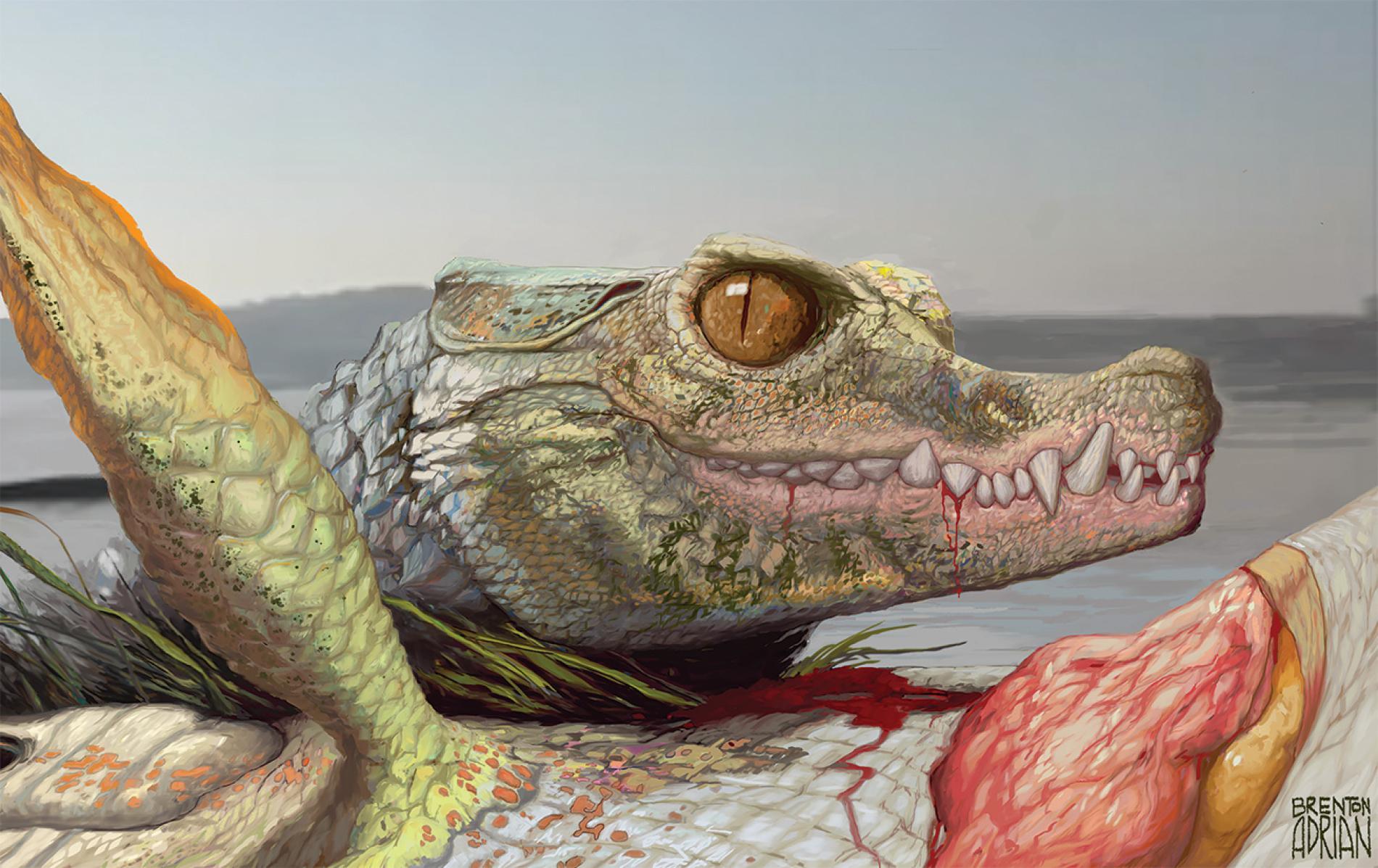 奇妙な新種ワニの化石を発見、雑食だった?ナショナルジオグラフィック日本版サイト