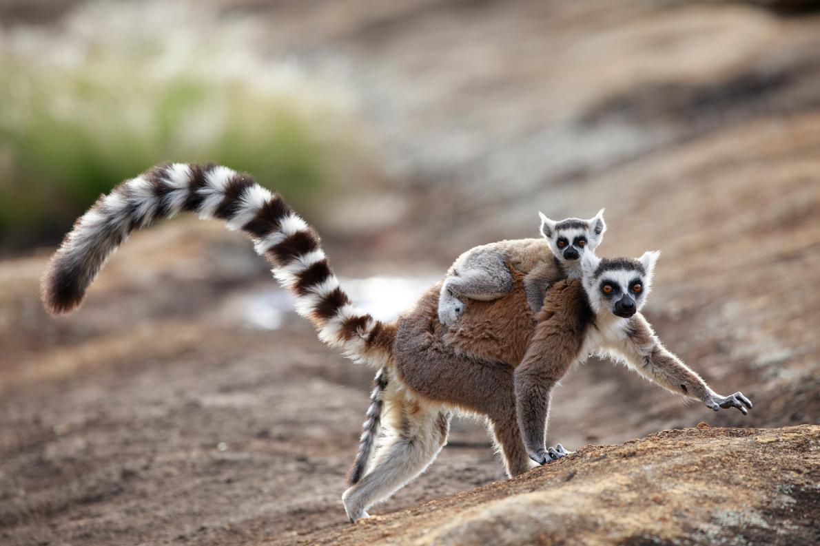 動物たちの多彩なフェロモン、女王蜂の支配から猫のすりすりまで ...