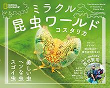 【連載】コスタリカ 昆虫中心生活 第138回 『タケコプター』を付けた不思議なツノゼミ