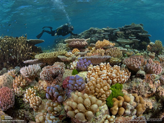 サンゴが美しいグレートバリアリーフ。