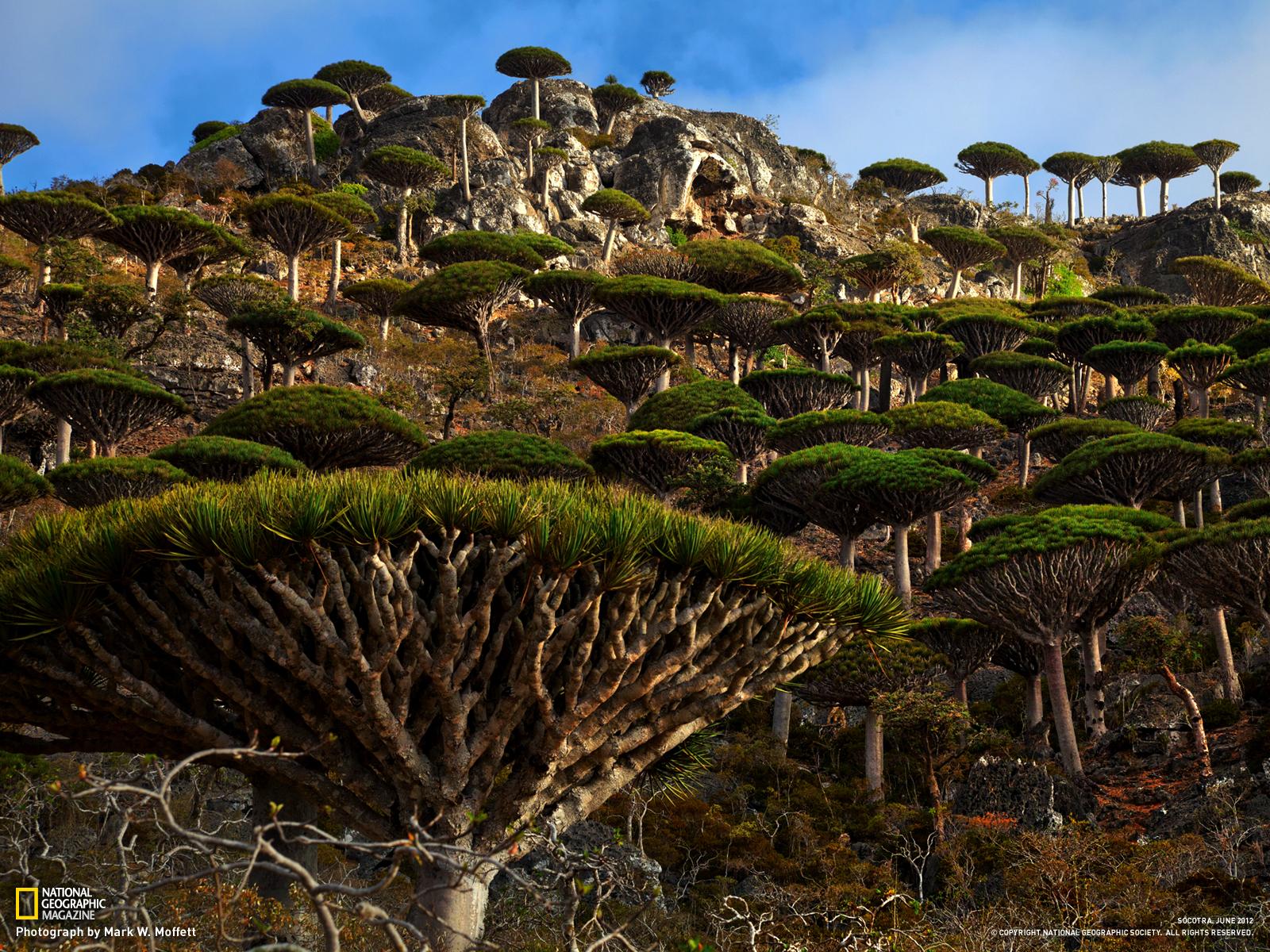 ソコトラ島の画像 p1_31