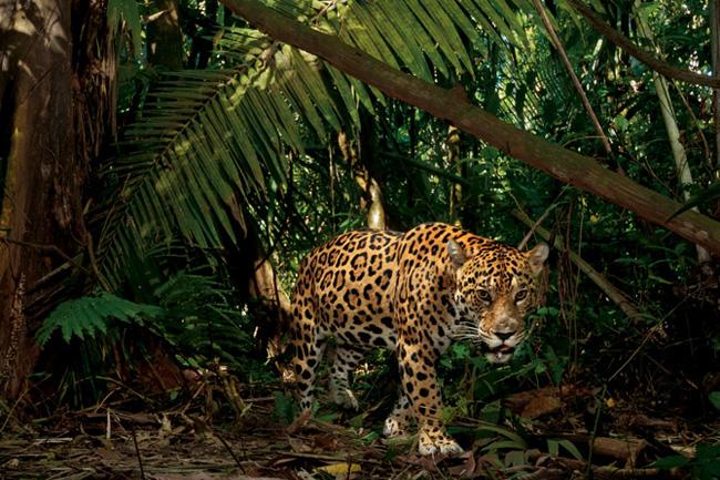 なんと鮮やかな色!熱帯雨林の生き物たち | ナショナル ...