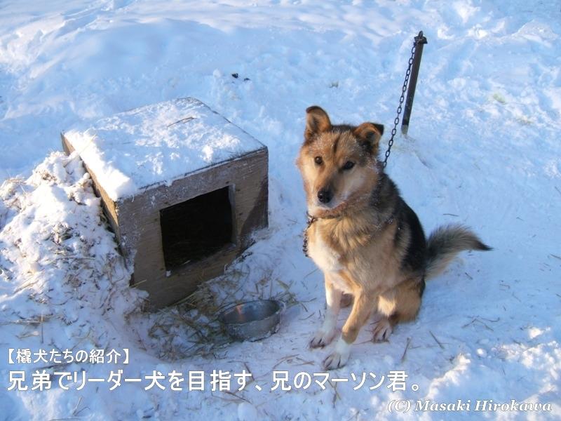 第47話 氷の魔女の息吹に耐える銀盤の巨体ナショナルジオグラフィック日本版サイト