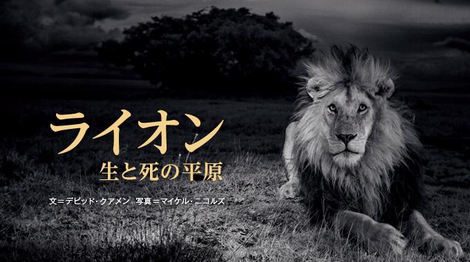 ライオン 生と死の平原