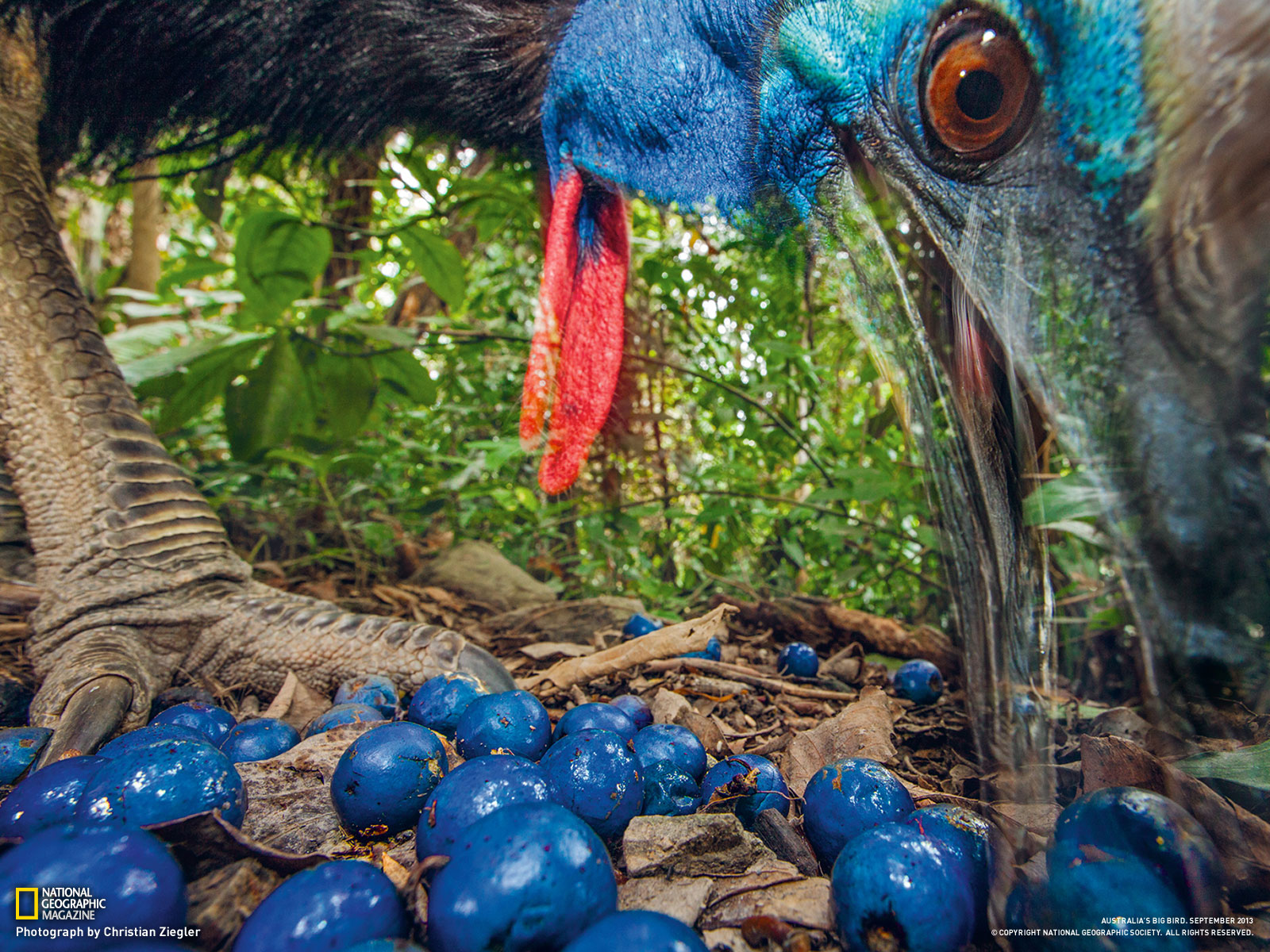 好物の青い果実を食べる ...
