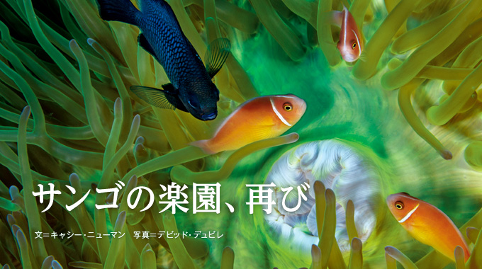 南太平洋 サンゴの楽園