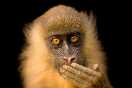 人間と見まがう動物たちの表情 ジョエル・サートレイの世界