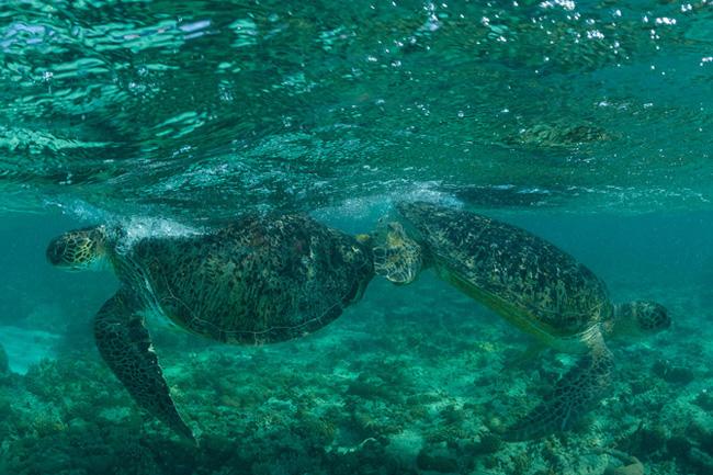 モザンビーク海峡 二つの環礁の...