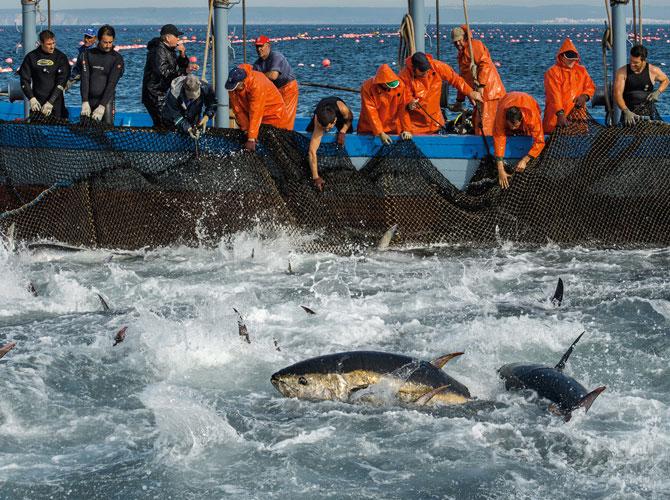 持続可能な漁業を目指して、ますます注目される定置網