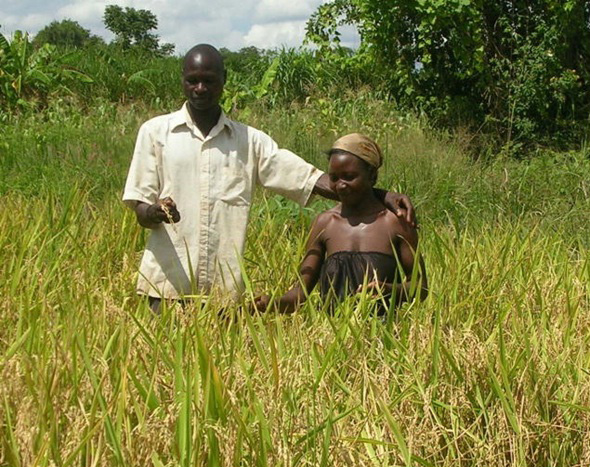 第1回 えっ、アフリカで米づくり...