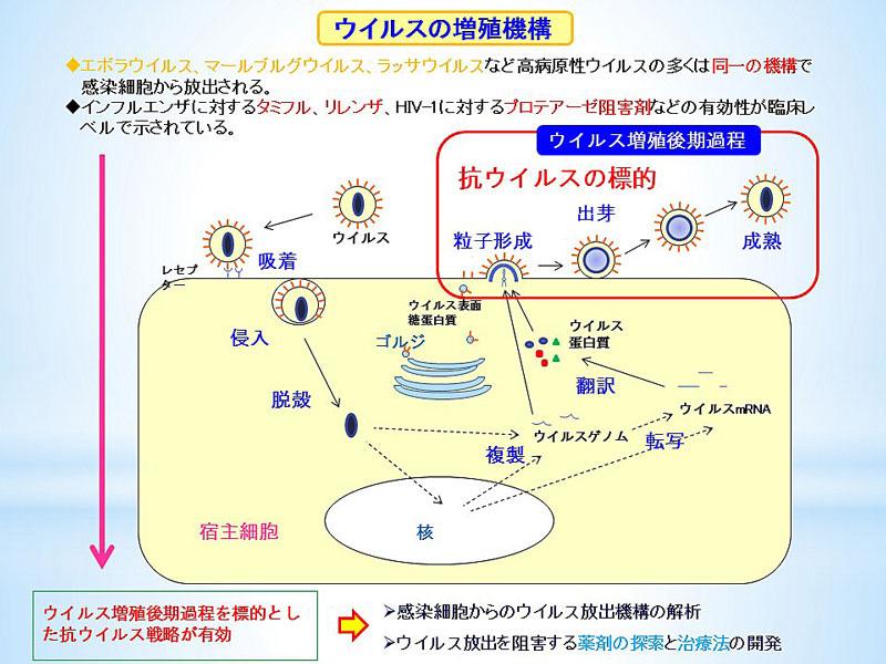 手ピカジェル ホームページ - tepika.net