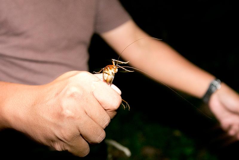 世界 一 でかい 寄生 虫 最大、最長、最重量、世界一の昆虫は ...