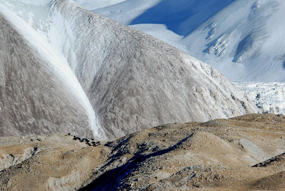 チベット高原でヤクの生息地が変動ナショナルジオグラフィック日本版サイト