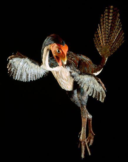 進化する恐竜アート:尾羽鳥   ...