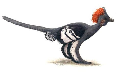 羽毛恐竜の全身色:羽の役割 | ...