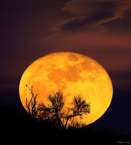 低い月はなぜ大きい? | ナショ...
