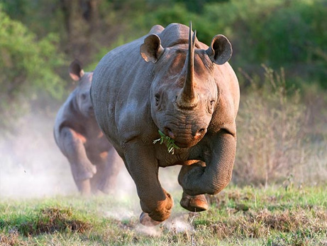 哺乳類、大型化に2400万世代 | ...