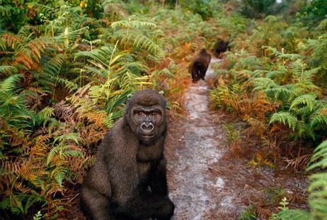 コンゴ 盆地