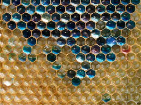 青色の巣、仏の不思議な蜂蜜 | ...