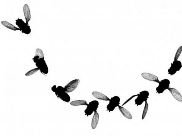 ハエ の 捕まえ 方