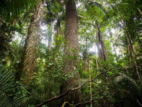 熱帯雨林のために戦うペルーの生態学者 | ナショナル ...