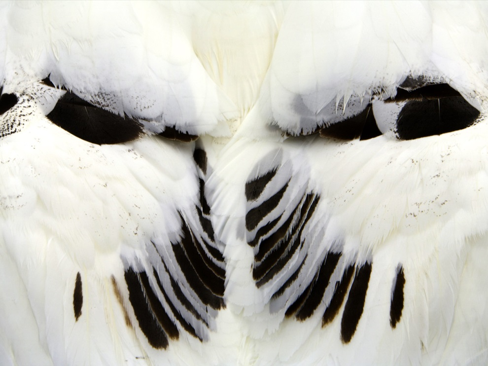 Wandering Albatross Wingsナショナルジオグラフィック日本版サイト