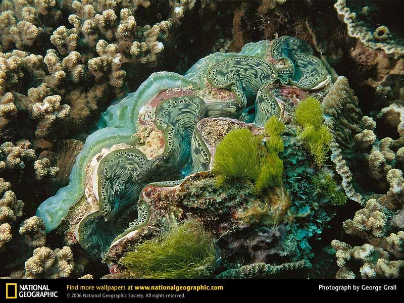 【タイ】絶滅危惧の貝を違法採取 韓国人女優、国立公園内で食べる ->画像>11枚