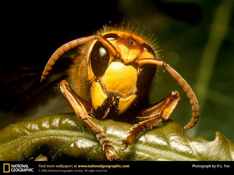 スズメバチの画像 p1_32