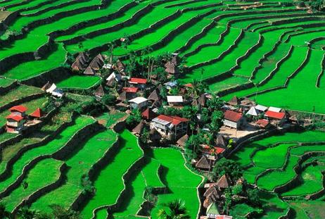 フィリピンの棚田群、危機遺産2012ナショナルジオグラフィック日本版サイト