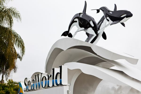 http://natgeo.nikkeibp.co.jp/nng/images/news/news_images/blackfish-effect-orlando-sea-world_75364_600x450.jpg