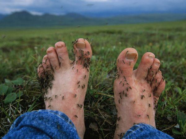 すべての講義 歴史の人 : 蚊の季節が到来、新たな病気や ...