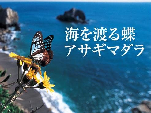 特集:海を渡る蝶 アサギマダラ 2007年5月号 ナショナルジオ ...