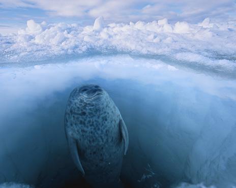 見るだけで涼む氷の世界へ……