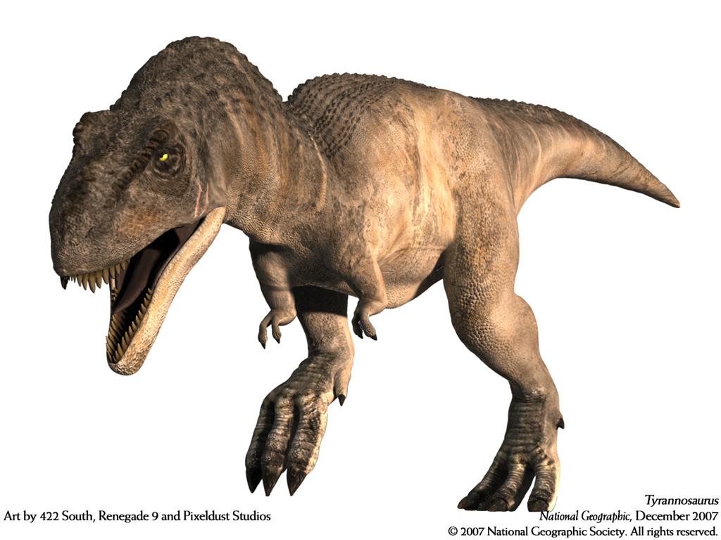 ティラノサウルスの画像 p1_27
