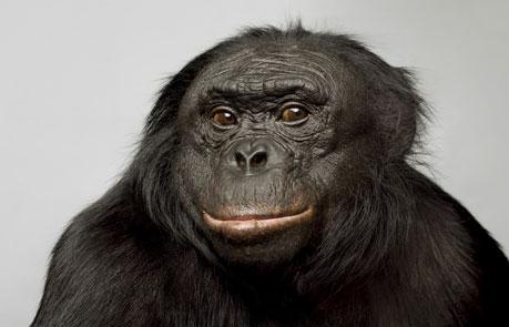 ボノボの画像 p1_1