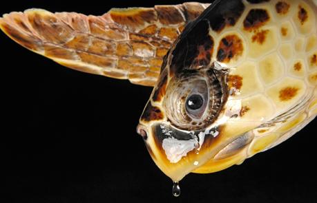 アカウミガメの画像 p1_23
