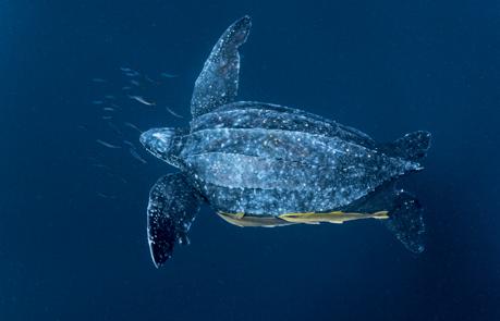 オサガメの画像 p1_10