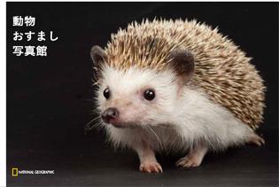 ナショジオ ワンダーフォトブック 動物おすまし写真館