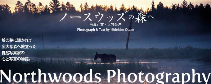 【連載】ノースウッズの森へ | ナショナル ジオグラフィック(NATIONAL GEOGRAPHIC) 日本版公式サイト