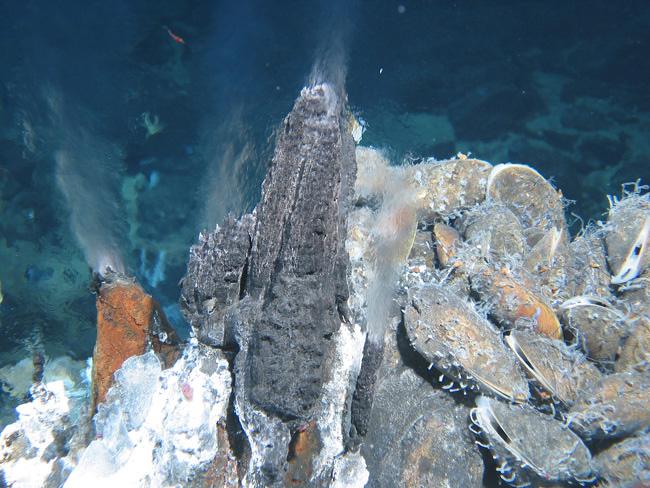 第1回 長沼毅 謎の深海生物にさぐる宇宙生命の可能性(前編)ナショナルジオグラフィック日本版サイト