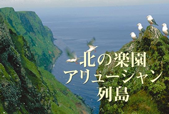 第19回 アリューシャン列島の無人島探検記ナショナルジオグラフィック日本版サイト