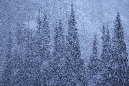 グレイシャー国立公園の画像 p1_12