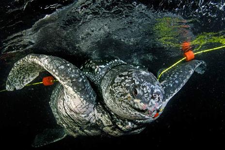 オサガメの画像 p1_18